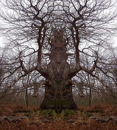 Strange Trees #tree spirits