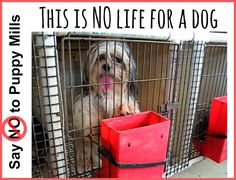 We are dedicated to educating people about puppy mills. We believe that creating awareness by spreading the word about our mission can help put an end to the cruel commercial dog breeding industry. We ask for your support. Please join us: https://www.facebook.com/saynotopuppymills