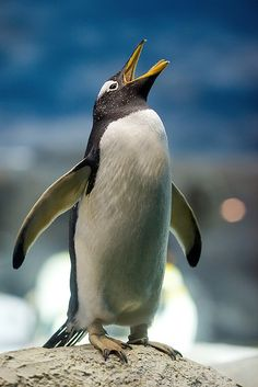 **Pinguin 135L F/2 | Flickr - Photo Sharing!