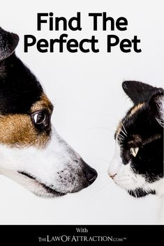So, if you're looking to bring a new furry friend into your life but aren't sure where to start with your search, there are exercises and tools you can use to maximize your chances of finding the ideal pet.