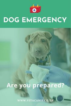 Dog Emergency What To Do! | Dog Health Tips & Dog Care - Are you a dog owner that knows what do in a dog emergency? Have you ever thought about how to perform CPR on a dog or even how to save a dog from dying? Dog first aid is so important! Click here to find out why. Vita Canis | first aid for dogs | first aid for pets | dog first aid what to do | dog health tips | dog warning signs | dog health care #dogs #doghealth #dogcare #dogfirstaid