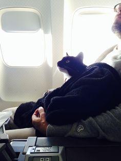 Condé Nast Traveler - Meet Napoleon, the World's Most Well-Traveled Cat