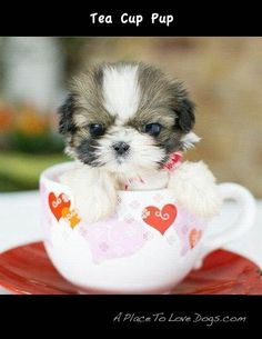 pup in a cup....so adorable :)