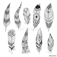 Vector: Set of feathers