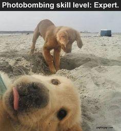 Cute Dog Photobombs