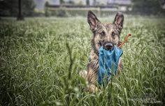 wet Dog.. by Sven Schubert on 500px