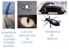 what-is-biomimicry