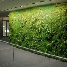 Green Wall System For A Laminar, Vertical Growth Of Small Leaved Plants,  Which Has An Amazing Effect On The Interior Design, Both Visual, And  Climatic.