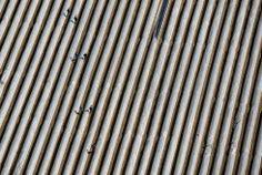plantación de espárragos en Kleistow, Alemania. Ralf HIrschberger