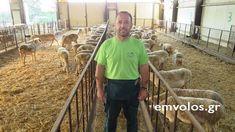 Κτηνοτροφία: Μικρό Μοναστήρι Θεσσαλονίκης Επίσκεψη στη Φάρμα Παπαμιχαήλ Από την εκτροφή προβάτων στην τυροκόμιση (Δείτε βίντεο-φωτογραφίες) #farm #thessaloniki #greece #sheep #video #photography #tastedriver News