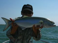 What Are The Sporting Qualities Of A Blue Fish In Los Suenos? http://gocostaricafishing.com/news/view/383/What_Are_The_Sporting_Qualities_Of_A_Blue_Fish_In_Los_Suenos_.html?source=pi
