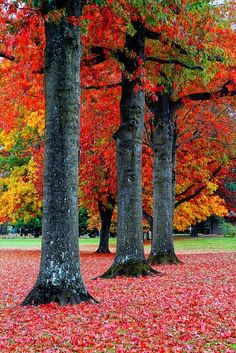 ✯ Fall in the Pacific Northwest
