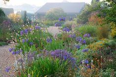 beth chatto garden in uk Dry Garden, Gravel Garden, Love Garden, Garden Plants, Garden Landscaping, Plant Design, Garden Design, Beth Chatto, Seaside Garden