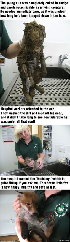 They found this cute little cub caked in the mud. Can you recognize what animal is it? - 9GAG