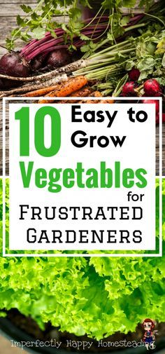 10 Easy to Grow Vegetables for the Frustrated Gardener - gardening has never been easier!: