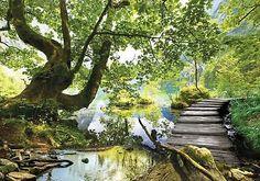3FX11235_P-1 Fototapete Tapete Wandbild Landschaft Landschaft Natur Wald Baum W