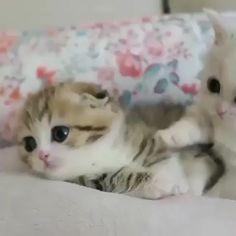 Very sweet – Nataliesi - Baby Animals Cute Baby Cats, Kittens And Puppies, Cute Cats And Kittens, Cute Funny Animals, Cute Baby Animals, I Love Cats, Kittens Cutest, Funny Cats, Cute Babies