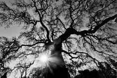 Amazing tree photo.