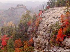 Red River Gorge, KY  Pinterest Rocks!  What a beautiful place.  Would I have found this without Pinterest?  I don't know, but it's on my list of places to visit now! :)