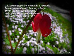 Képes idézet a szeretet erejéről, mely A szeretetről című gondolatmorzsából