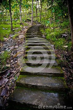 Old staircase in the middle of the forest. old stairs. mossy stairs in the forest.