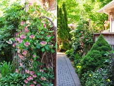 Three Dogs in a Garden: More Ideas for the Narrow Space Between Suburban Homes