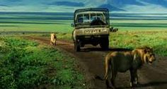 Lion in Ngorongoro crater