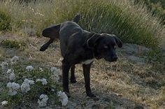 """2003 06 01, Cotignac, France, """"La Véronique"""", Rusty, the dog"""