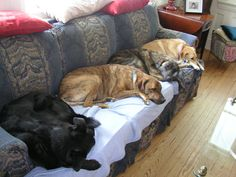 Their Mom left for week. Dogs move into depression.