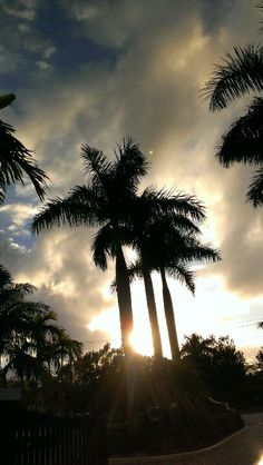 47d9727c113 38 Best Florida Everglades images