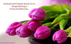 Fresh Flowers for u wish good morning.