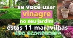 Se usar vinagre no seu jardim estas 11 maravilhas vão acontecer