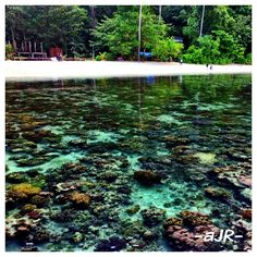 Beautiful coral at Ora Beach Sawai, Ambon, Indonesia