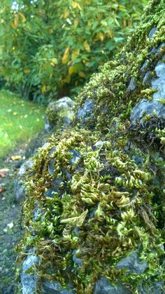 A study in close ups and focus in nature. The shape of the moss on the rocks is fascinating! #photography #art #shapes #colours