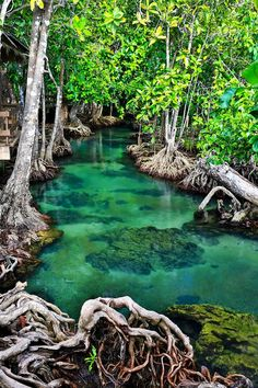The Emerald Stream, Krabi, Thailand. For your stayat Krabi, check out our… Places Around The World, Oh The Places You'll Go, Places To Travel, Travel Destinations, Places To Visit, Beautiful Places In The World, Thailand Adventure, Thailand Travel, Asia Travel
