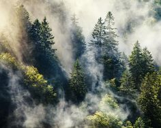 Smoky forest by Steffen Egly on 500px