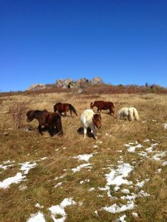The Grayson Highlands - Wild Ponies