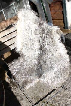 77 Best Wool Roving Raw Fleece Clean Fiber And Pelts Liongate