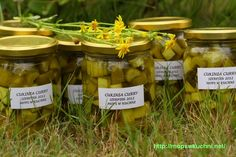 Cukinia curry Pickles, Cucumber, Stuffed Mushrooms, Curry, Canning, Vegetables, Garden, Food, Stuff Mushrooms