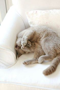 Creamy colored cat dreaming with his paws over his eyes.  A heart nurturing  image.