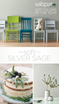 """When you want on-trend gray … and a color too … you can't miss with this versatile silver sage. Modern yet neutral, it pairs well with warm wood floors and sleek accents."" Sue Kim, Valspar Color Strategist. One of 12 Valspar 2017 Colors of the Year: Rock Solid VR110C at Ace. https://www.askval.com/ColorsOfTheYearLanding/Soft-Silver-Sage"