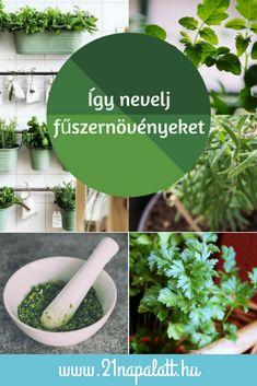 Az egészséges életmód egyértelműen előnyben részesíti a friss hozzávalókat, így előbb-utóbb elkerülhetetlen, hogy te is fűszernövényeket nevelgess az ablakodban. Évek óta zöldellnek nálam kis cserepekben ezek a növények, ezért összegyűjtöttem a legfontosabb trükköket, amelyekkel sokáig épek és egészségesek maradnak a fűszerek! Herb Garden, Garden Plants, Diy Garden Projects, Medicinal Plants, Small Gardens, Horticulture, Gardening Tips, Garden Landscaping, Orchids