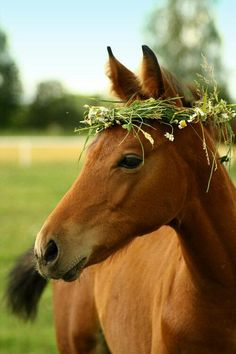 what if all the horses in the fields surrounding the ceremony wore an alfalfa or daisy chain crown.
