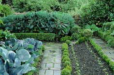 Cottage kitchen garden design