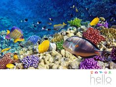 VIAJES PARA JUBILADOS TODO INCLUIDO AL CARIBE. Intentar nuevas experiencias siempre agregará emoción a tu vida. Si eliges viajar con nosotros, ya sea a las playas del Caribe en México o República Dominicana, te recomendamos hacer snorkeling, una actividad que te permitirá contemplar y sorprenderte con el mundo marino con sus hermosos arrecifes, una gran variedad de peces, esponjas, tortugas marinas y más. Te invitamos a visitar nuestro sitio web para obtener más información sobre los packs…
