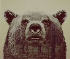 Retratos fantásticos em dupla exposição misturam animais e paisagens - Follow the Colours