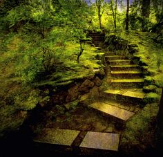 Green Japanese Garden.