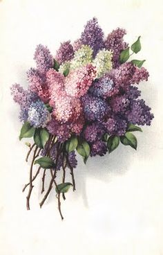 "According to the Victorian ""Meaning of Flowers"", beautiful spring Lilacs translate to Love, Beauty, Acceptance, and Sweetness ~ in the language of flowers. Check the site for more vintage botanical images! Vintage Ephemera, Vintage Cards, Vintage Postcards, Images Vintage, Vintage Pictures, Lilac Bouquet, Hydrangea Bouquet, Language Of Flowers, Deco Floral"
