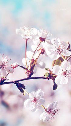 Wallpaper for iPhone 7 Flower Wallpaper, Screen Wallpaper, Mobile Wallpaper, Wallpaper Backgrounds, Iphone Wallpaper, Hipster Wallpaper, Wallpeper Tumblr, Sakura Cherry Blossom, Cherry Blossoms