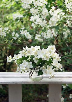 Cut some from your white shrub rose hedge.